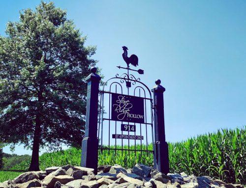 Lauren & Dan's Reception / Stone Ridge Hollow